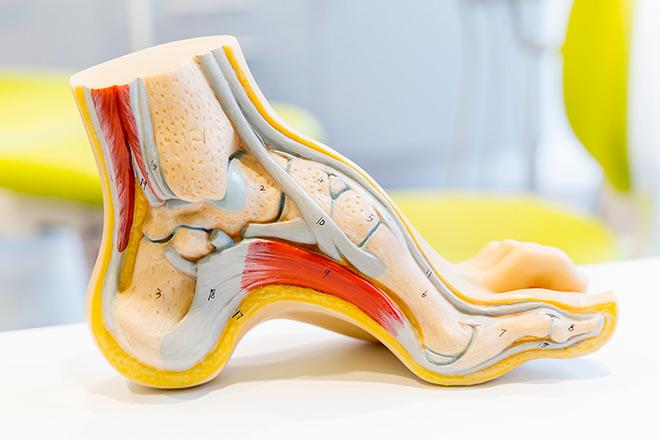 Блок 1. Функциональная анатомия движения